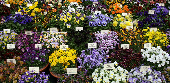 Climate change forces flower festival forward a month since 1960s, study shows