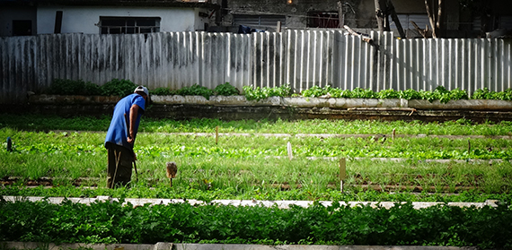 What better relations with the US mean for city farms in Cuba