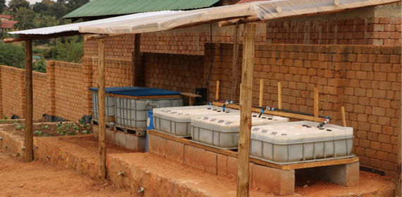 Aquaponics in Uganda – Questions of Sustainability