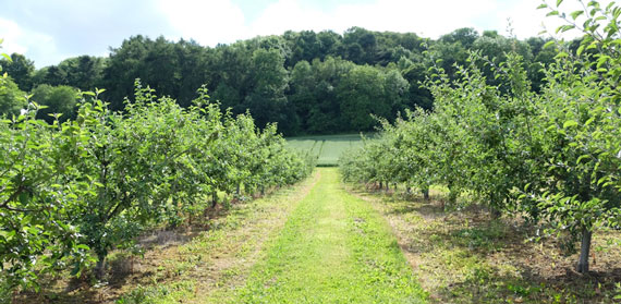 Searching for Garden of Eden in Agriculture; Part Four