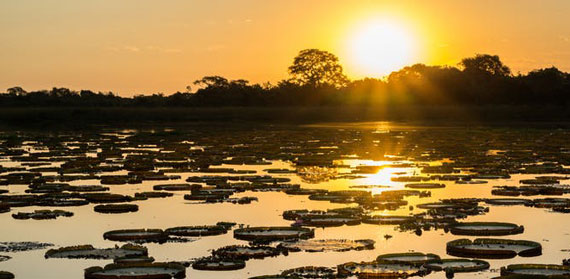 Hydroelectric Dams Threaten Brazil's Mysterious Pantanal – One of the World's Great Wetlands