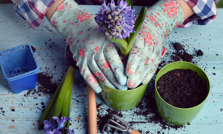 Peat compost to be banned – luckily, green alternatives are just as good for your garden