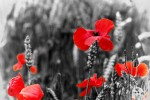 Remembrance Sunday and Armistice Day 2015
